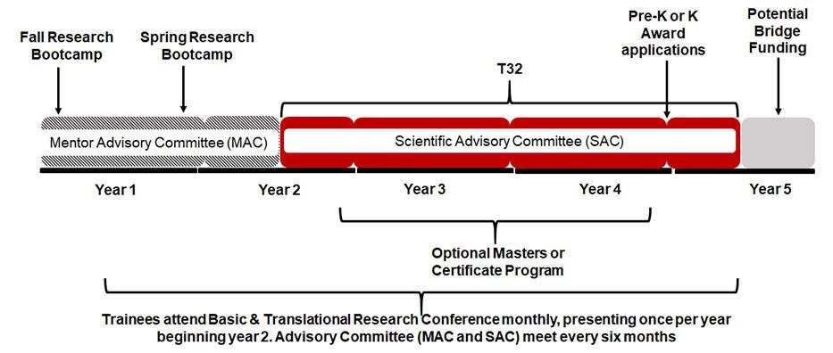 Pulmonary T32 training timeline