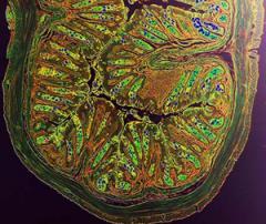 Histologic image