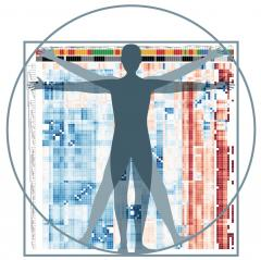 Heat map visualization of gene expression signatures of human innate lymphoid cells throughout the body